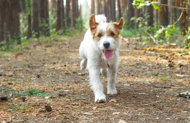 Pets welcome at Creekside Camp & Cabins.