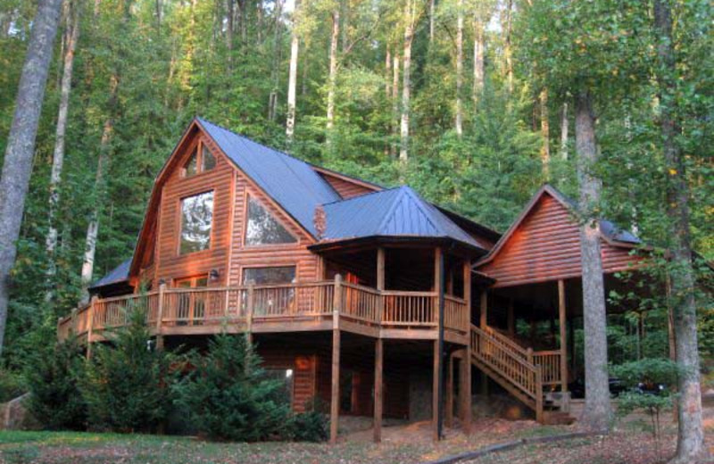 black bear cabin rentals blue ridge ga resort reviews