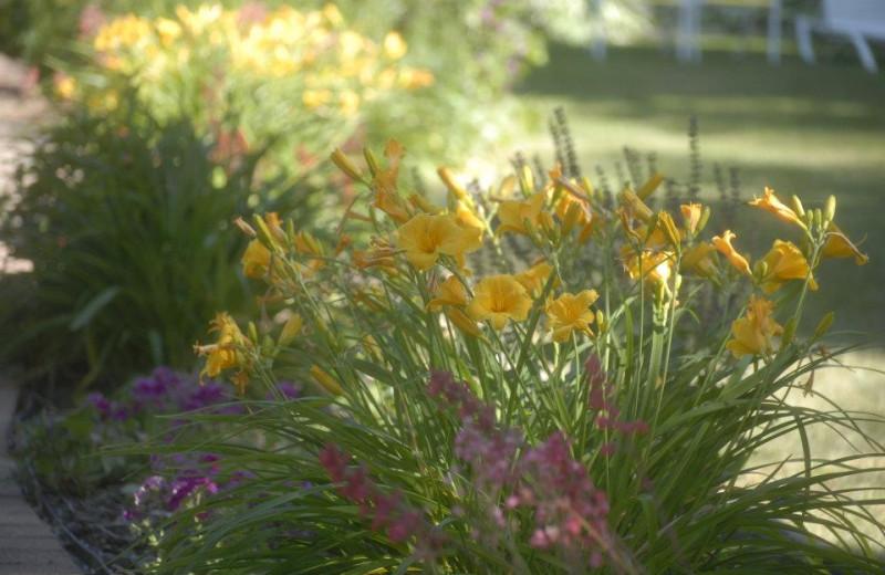 Spring at The Shallows Resort.