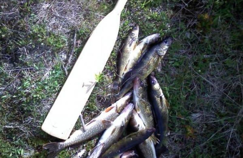 Fishing at Lady Bug Lodge