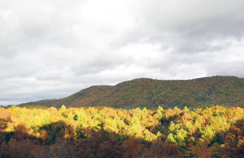 Fall color at Nevaeh Cabin Rentals.