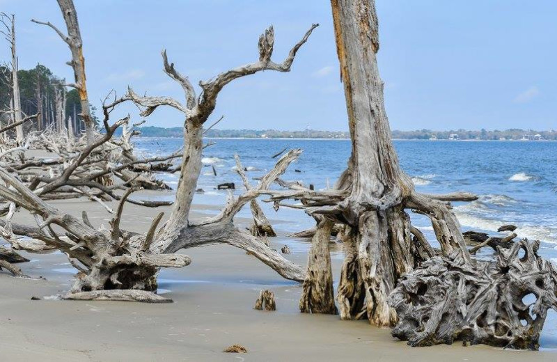 Beach at Westin Jekyll Island