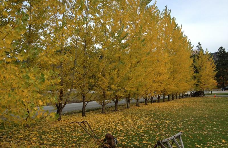 Fall leaves at Obertal Inn.