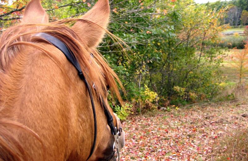 Horseback riding at Pine Lakes Lodge.