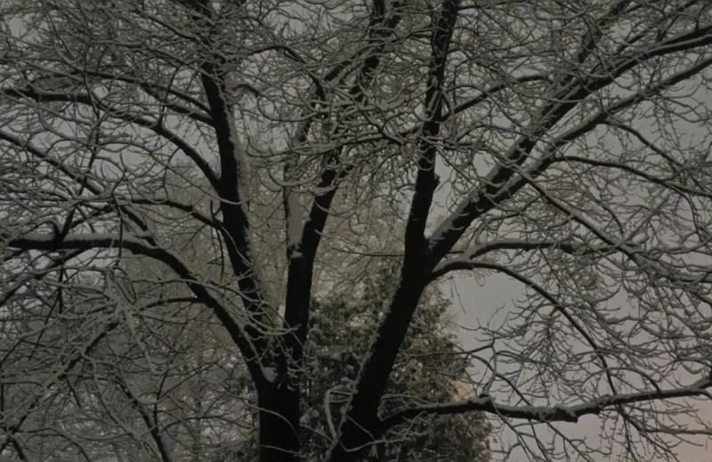 Snow covered tree at Glidden Lodge Beach Resort.
