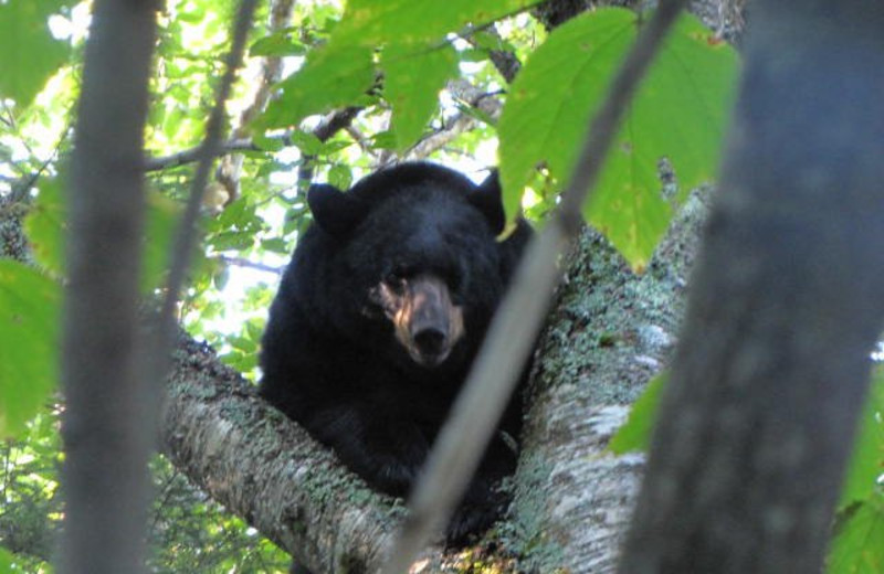 Wildlife Near Sunrise Ridge Guide Service