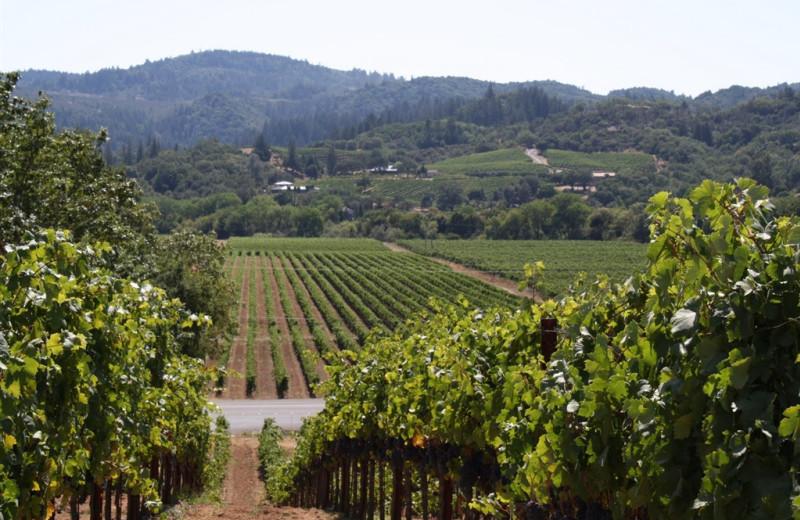 Winery near Camellia Inn.