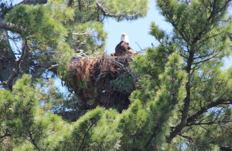 Eagle's nest at North Country Inn.