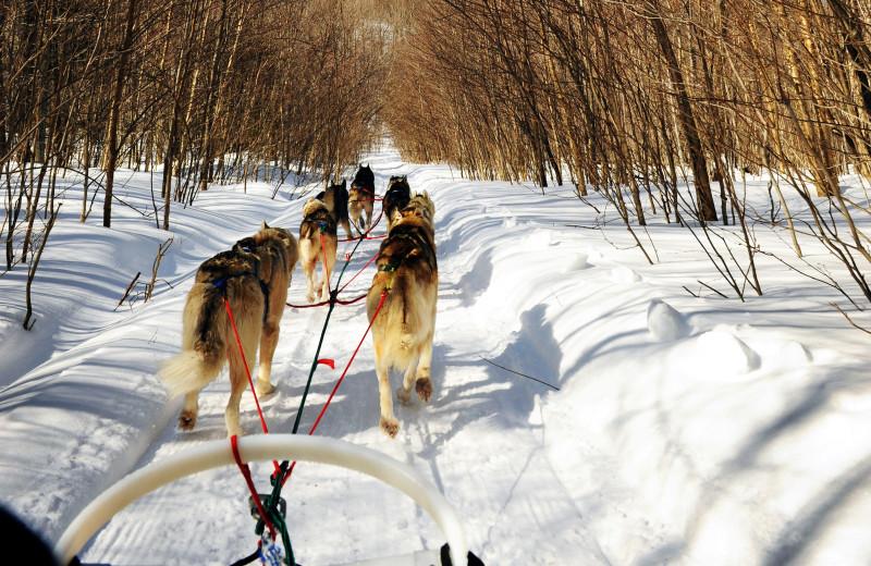Dog sledding at Stowe Mountain Lodge.