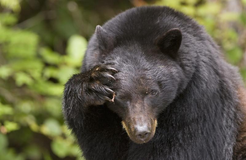 Bear at Wickaninnish Inn.