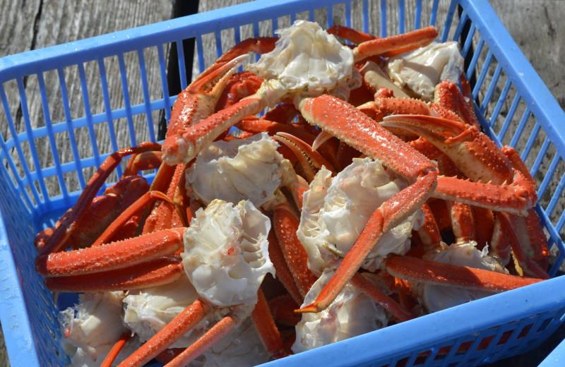 Crab at Zachar Bay Lodge.