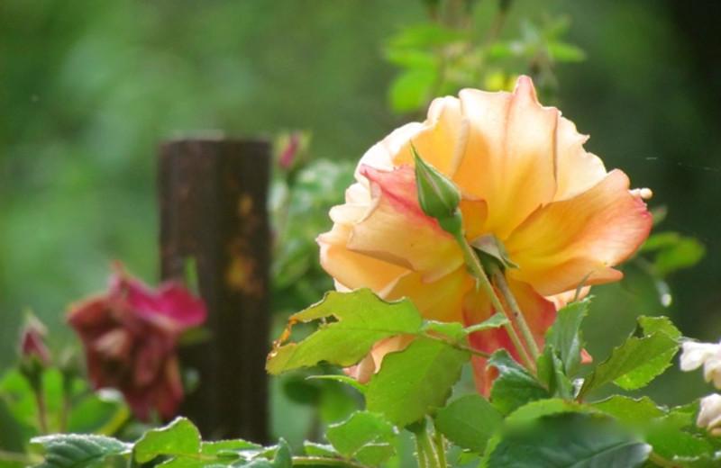 Flowers at Roseledge Country Inn.