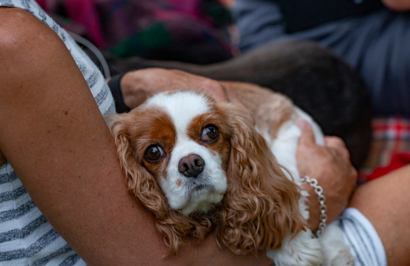 Pets welcome at Ruttger's Bay Lake Lodge.