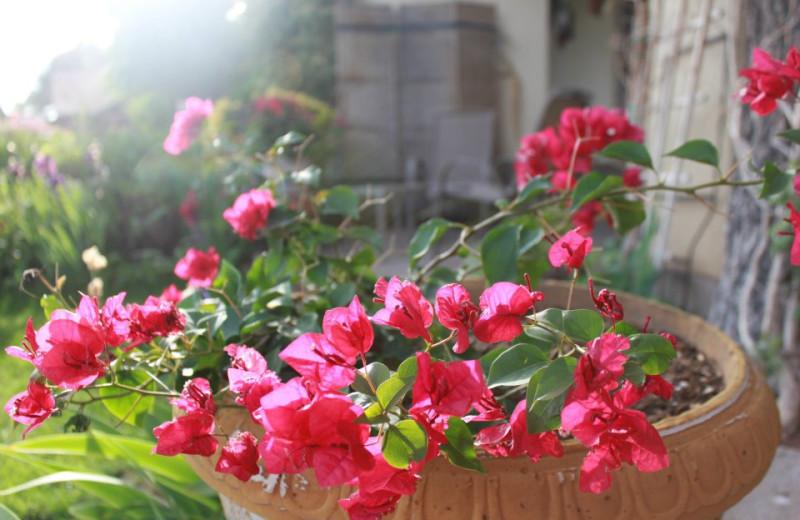 Garden flowers at Inn at Paradise.
