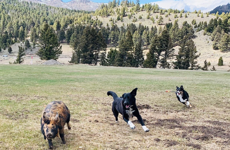 Pets welcome at Hardscrabble Ranch.
