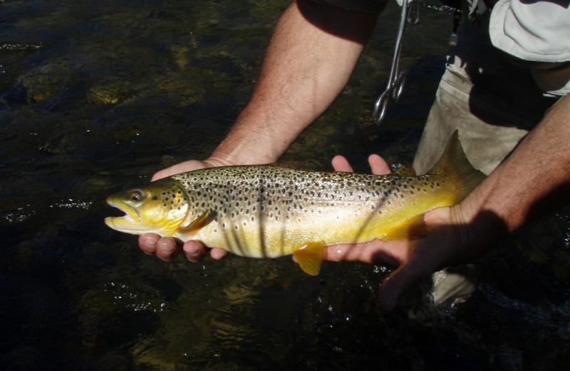 Trout at Madison Management.