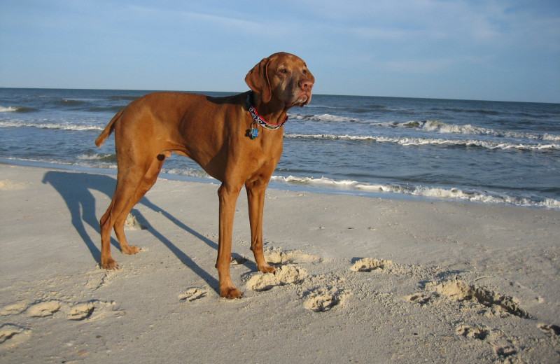 Pets welcome at Collins Vacation Rentals.