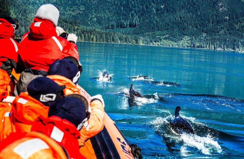 Whale watching at April Point Lodge and Fishing Resort.