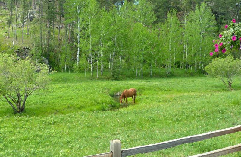 Horses at Newton Fork Ranch.