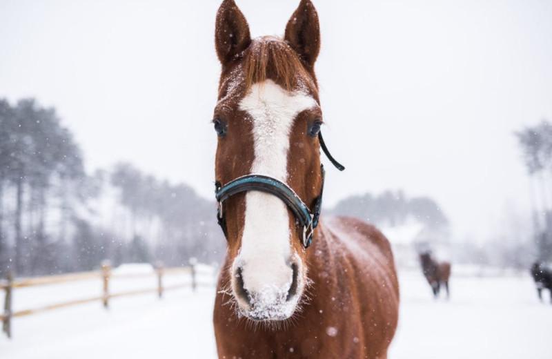 Edson Hill Horses