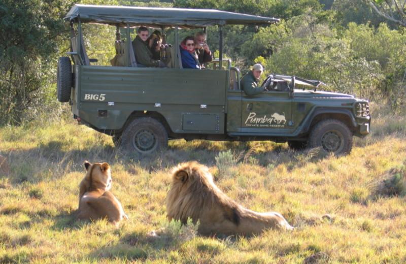 Safaris near Beach Hotel.