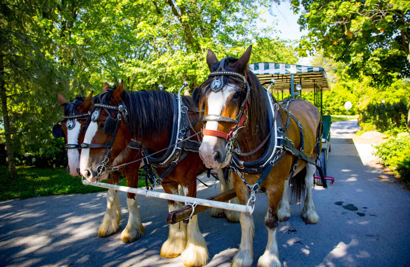 Carriage rides at Elmhirst's Resort.