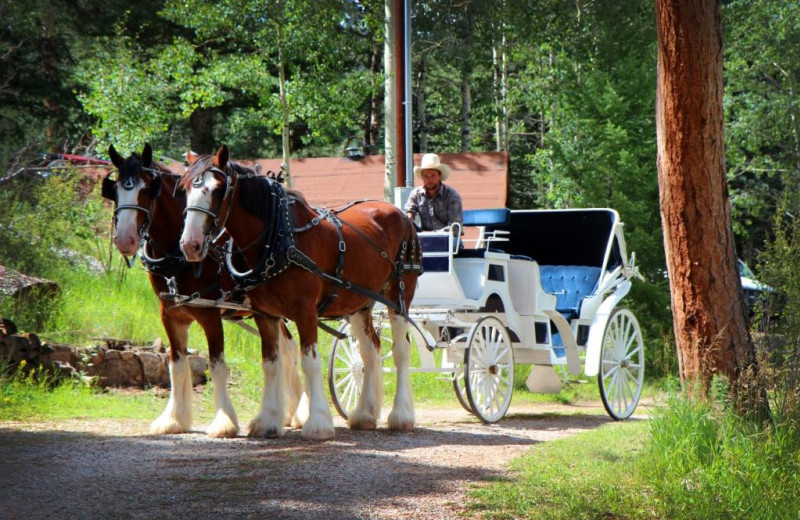 Horse carriage at Meadow Creek Lodge and Event Center.