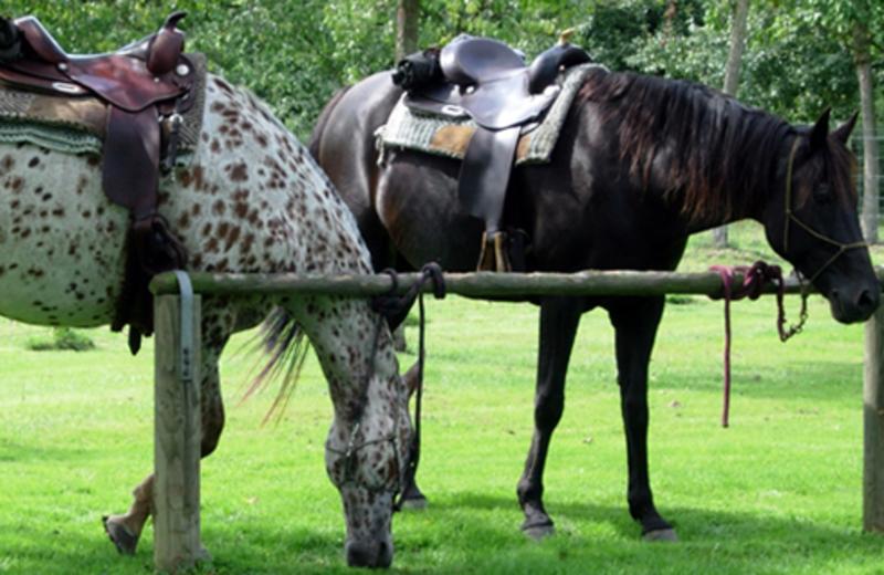 Horses at Fairway Inn