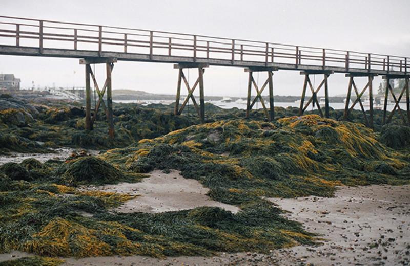 Low tide at Newagen Seaside Inn.