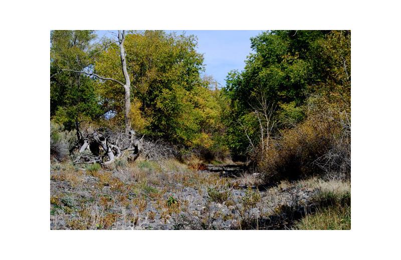 Forest near Marianna Inn.
