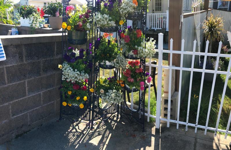 Garden at Footbridge Beach Motel.