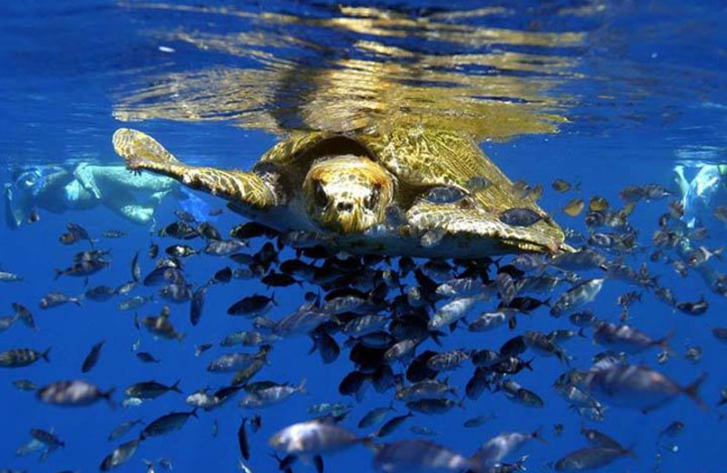 Sea turtle at The Divine Dolphin.