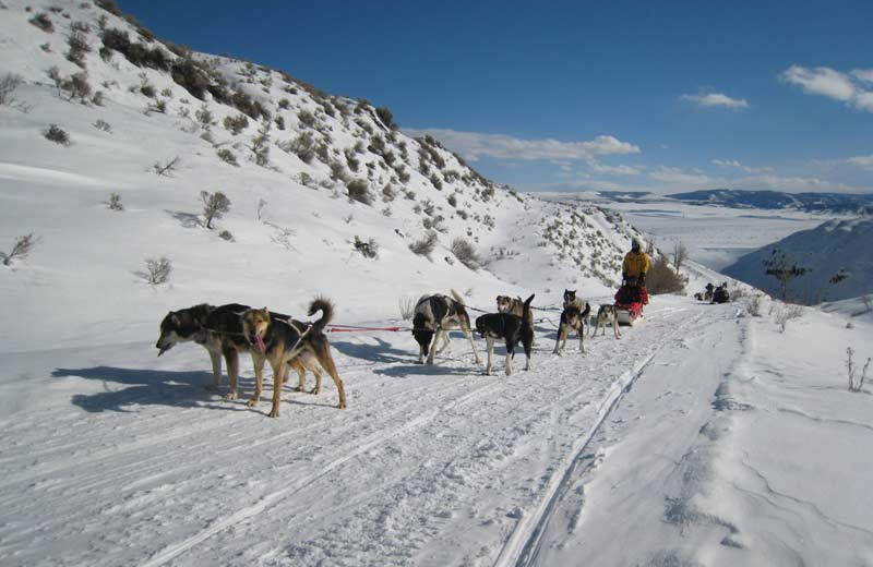 Dog sledding at Vista Verde Ranch.