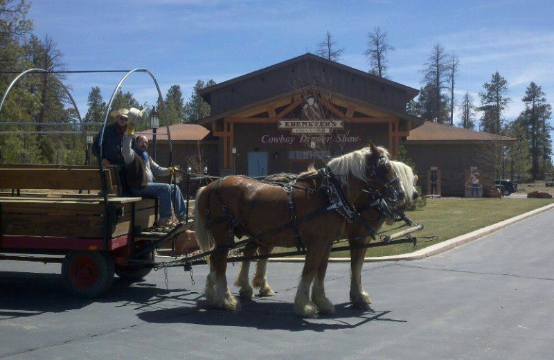 Horse wagon ride at Best Western Bryce Canyon Grand Hotel.