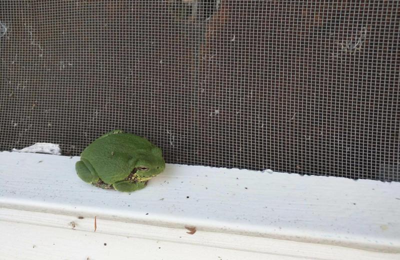 Frog at Woodlawn Resort.