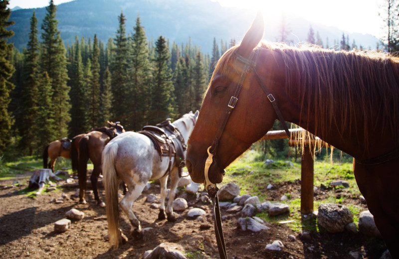 Horses at Banff Trail Riders.