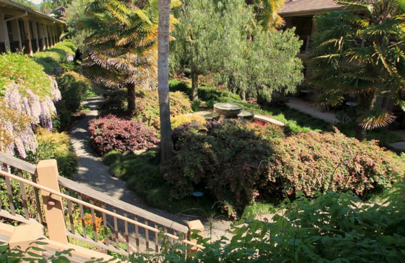 Garden at El Pueblo Inn