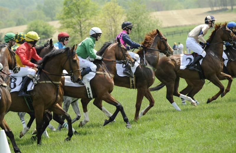 Horse racing at Salamander Resort & Spa.