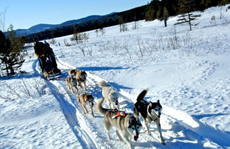 Dog Sled at West Branch Pond Camps