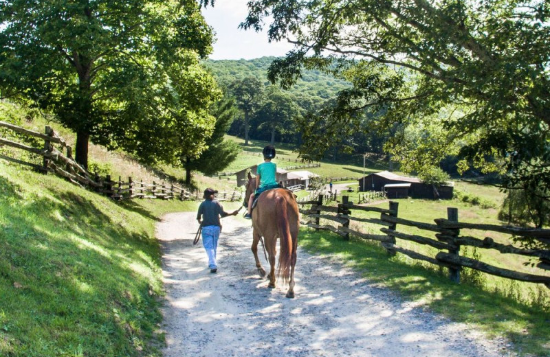 Horseback riding at Cataloochee Ranch.