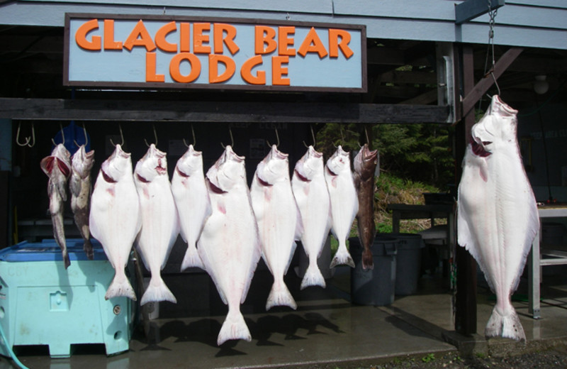 Fishing at Glacier Bear Lodge.