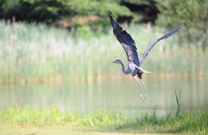 Wildlife at Lake George RV Park.