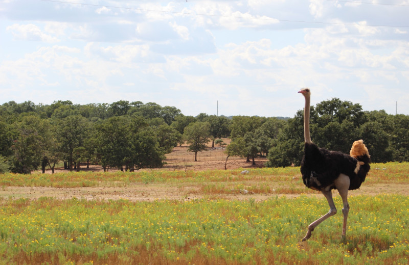 Ostrich at The Exotic Resort Zoo.