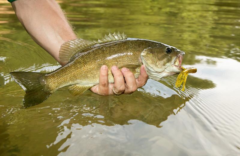 Fishing near Inn at Monticello.