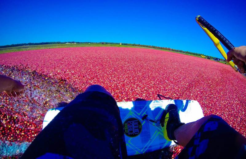 Wake boarding on cranberries at Pitlik's Sand Beach Resort.
