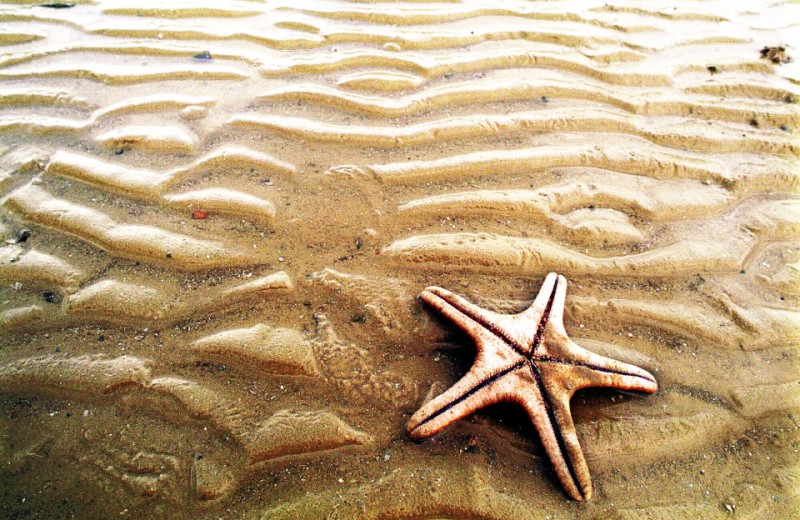 Starfish On Beach at Hatteras Realty