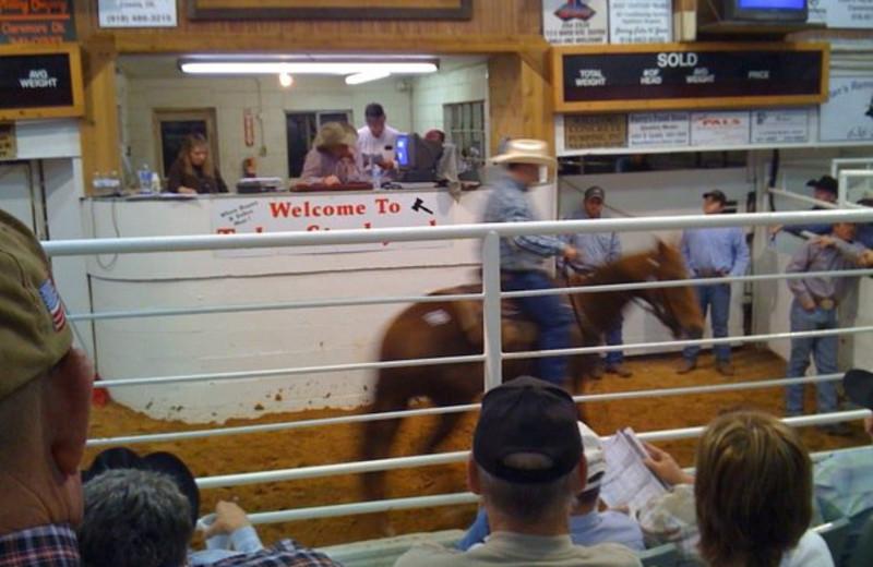 Ranch Rodeo at Horseshoe Canyon Ranch