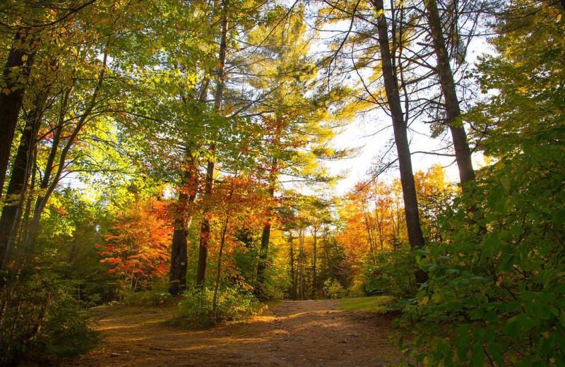 Fall at Bonnie Lake Resort.