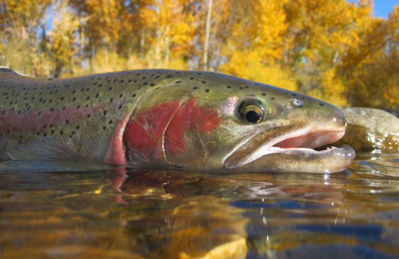 Fishing at Salmon Catcher Lodge.
