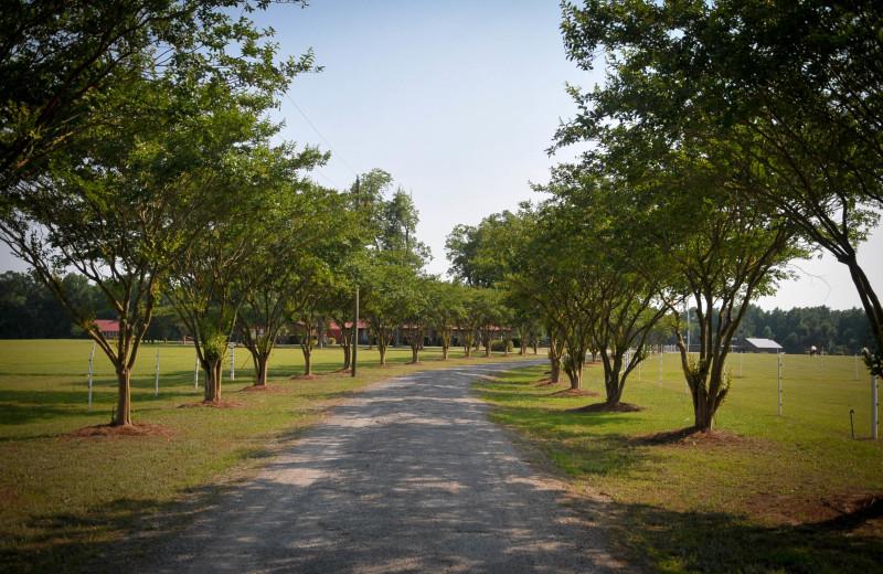 Path at Buckhead Ranch.